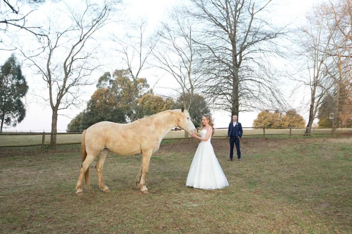 Bride stroking a horse with the groom watching