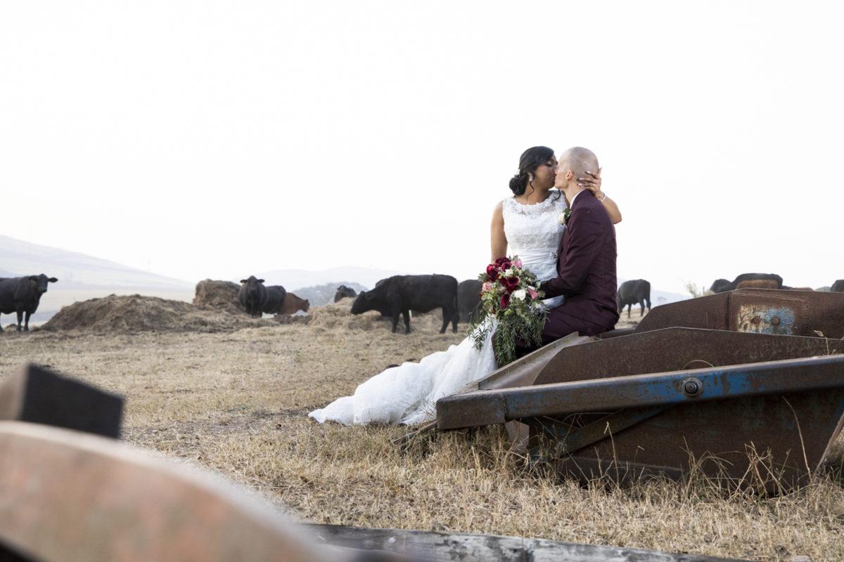 Eden Lassie Wedding cows